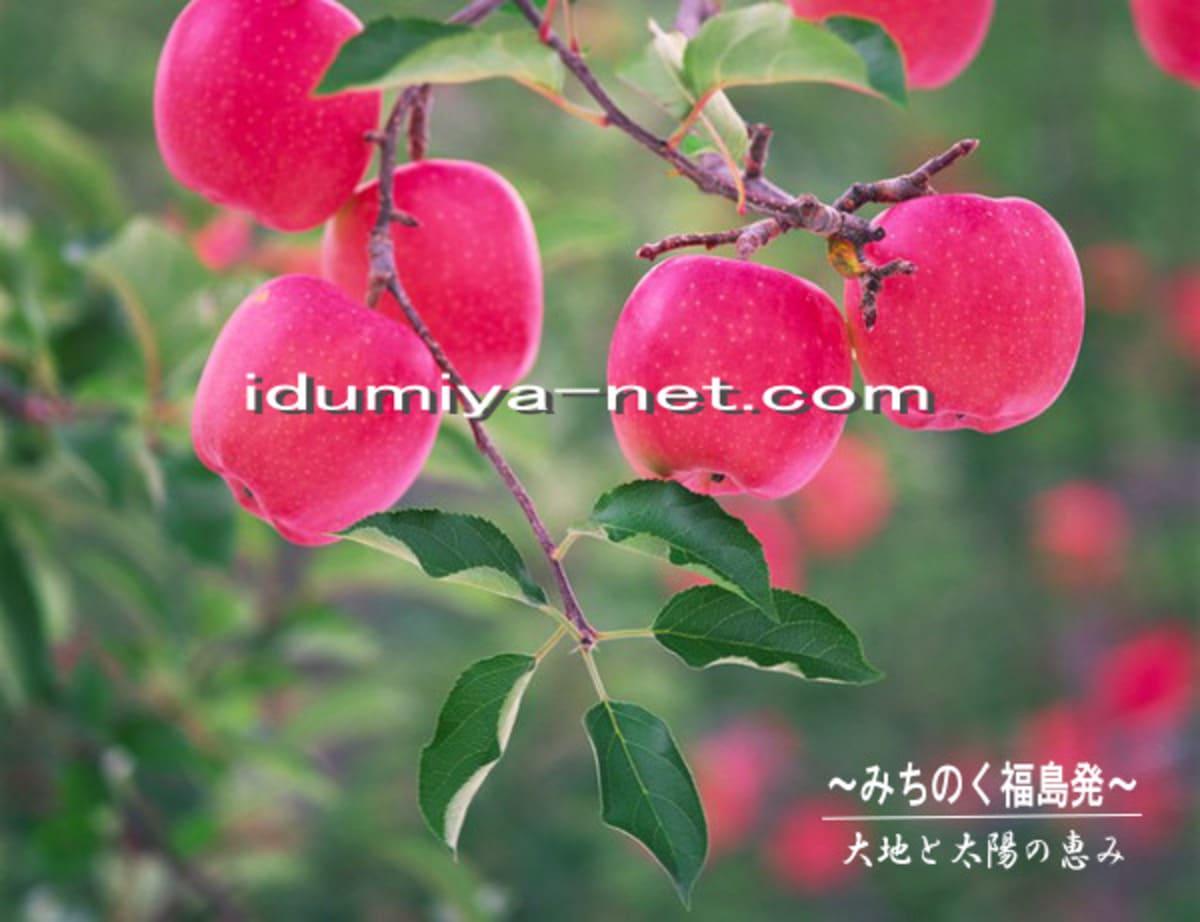 福島の恵まれた大地と気候で育てられたサンふじりんこ