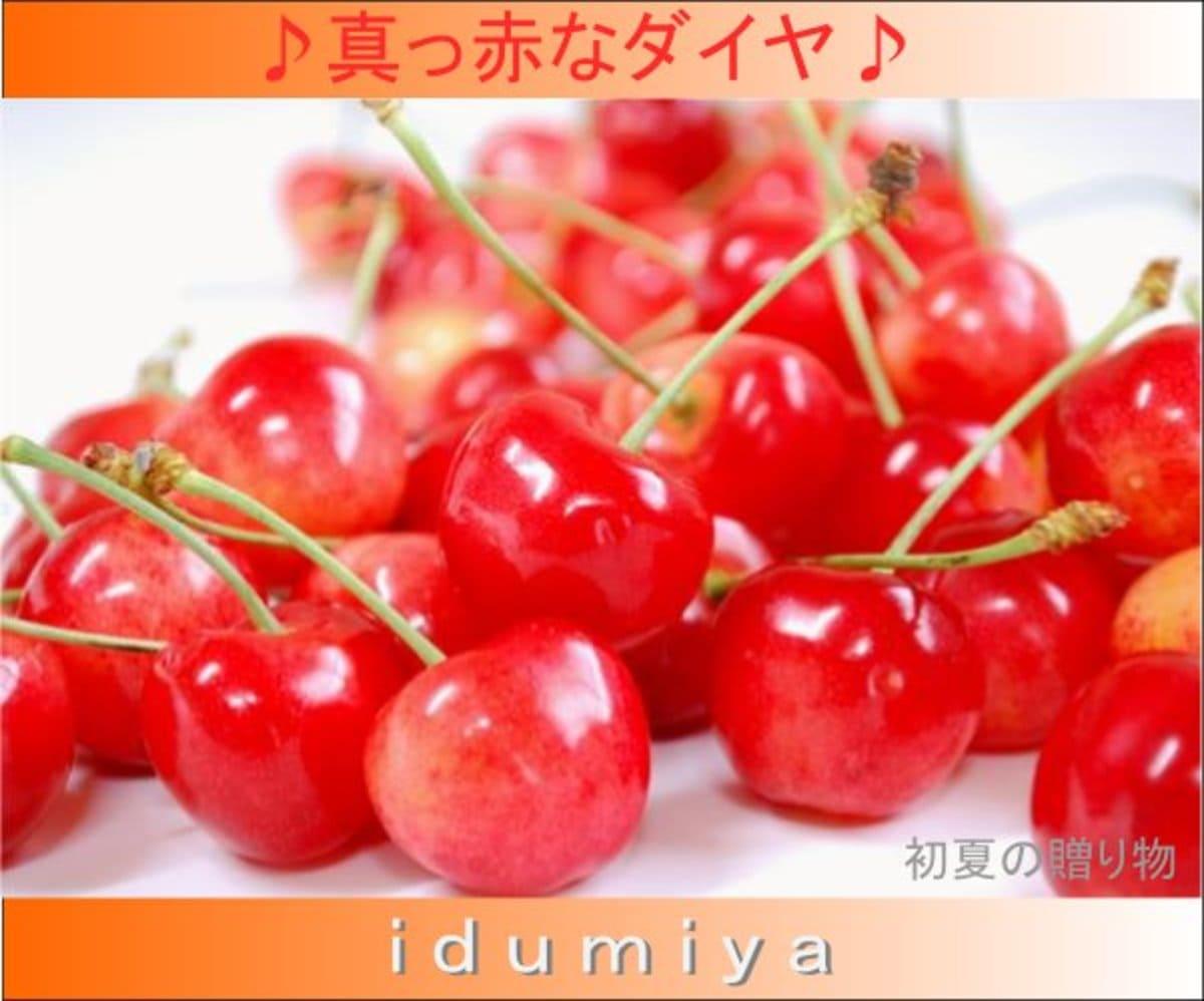 真っ赤な佐藤錦と紅秀峰