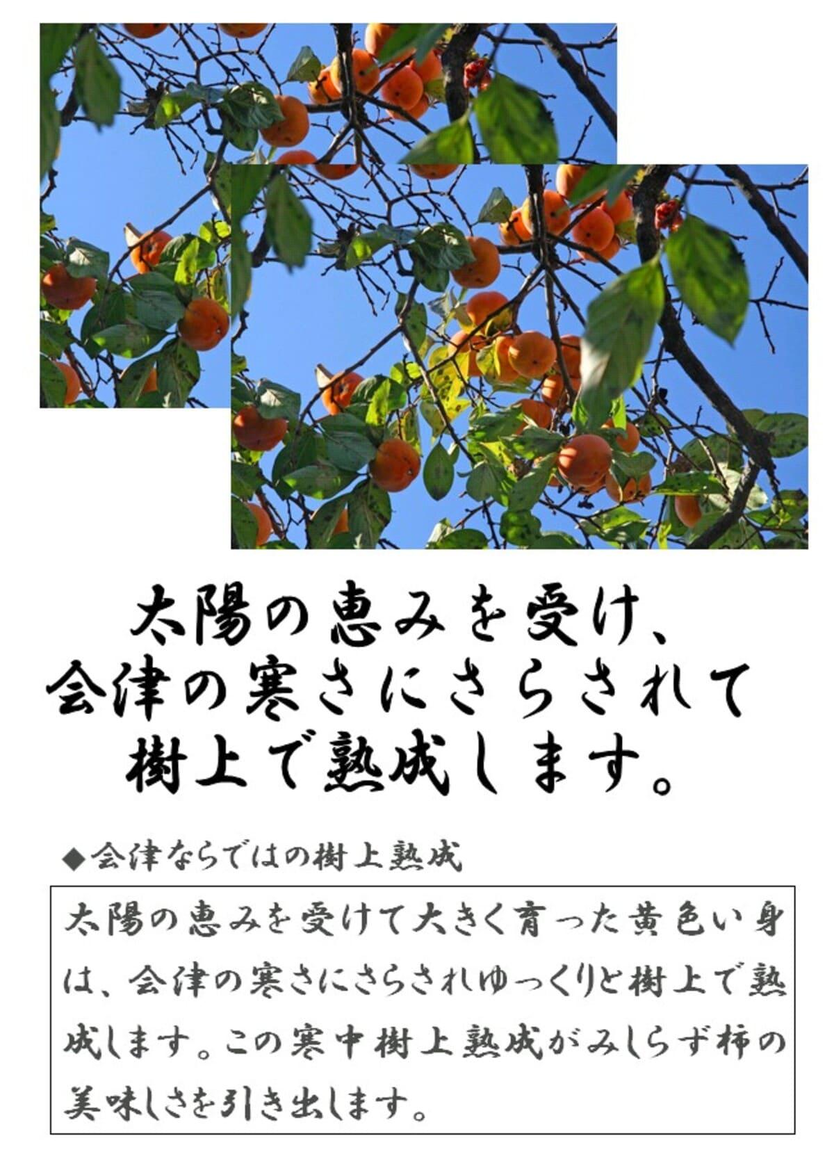 会津の見知らず柿
