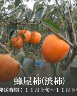 蜂屋柿(渋柿)