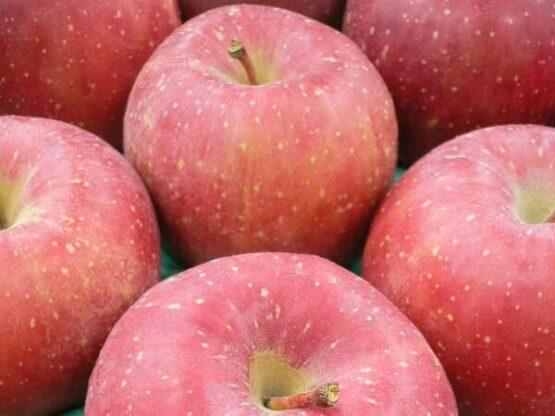今年の蜜入りの期待大!福島のサンふじりんご