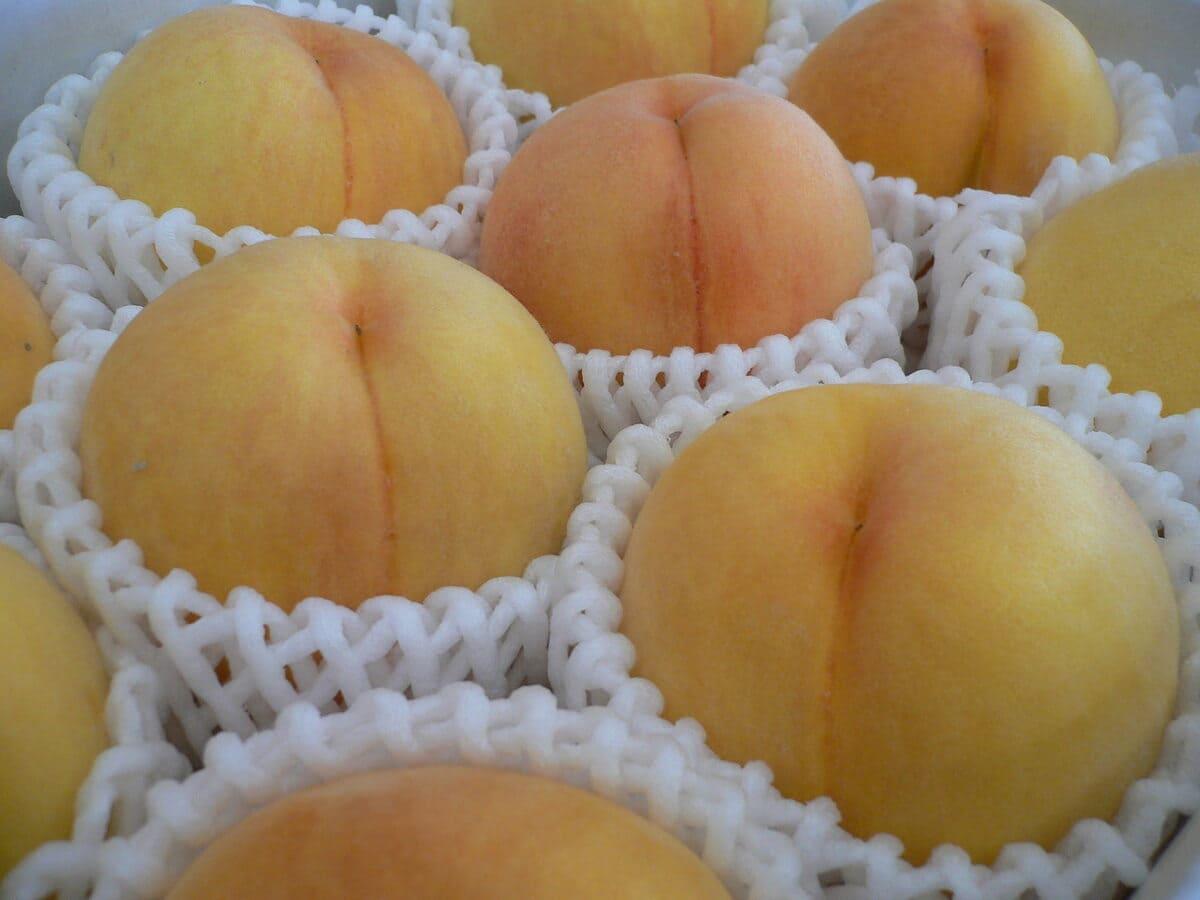 贈答にも最適な黄金桃